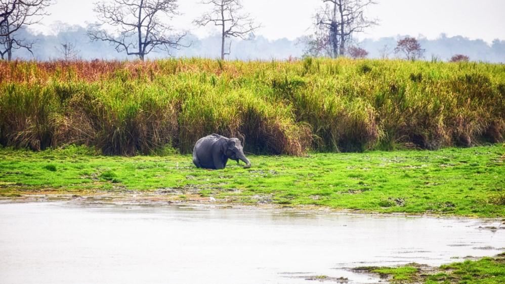 Preservação e proteção aos elefantes – Dia Mundial do Elefante
